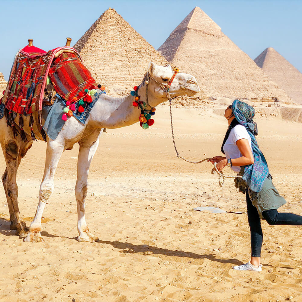 Animals Travel Alerts Safety Guidelines - Egypt Tours Portal
